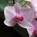 flower, 0rchideen, blossom