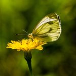 wei0ling, nature, butterfly