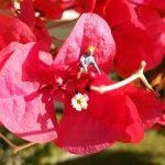 miniature figures, blossom, bloom