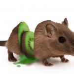 mouse, kiwi, cut